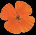 flower-v1